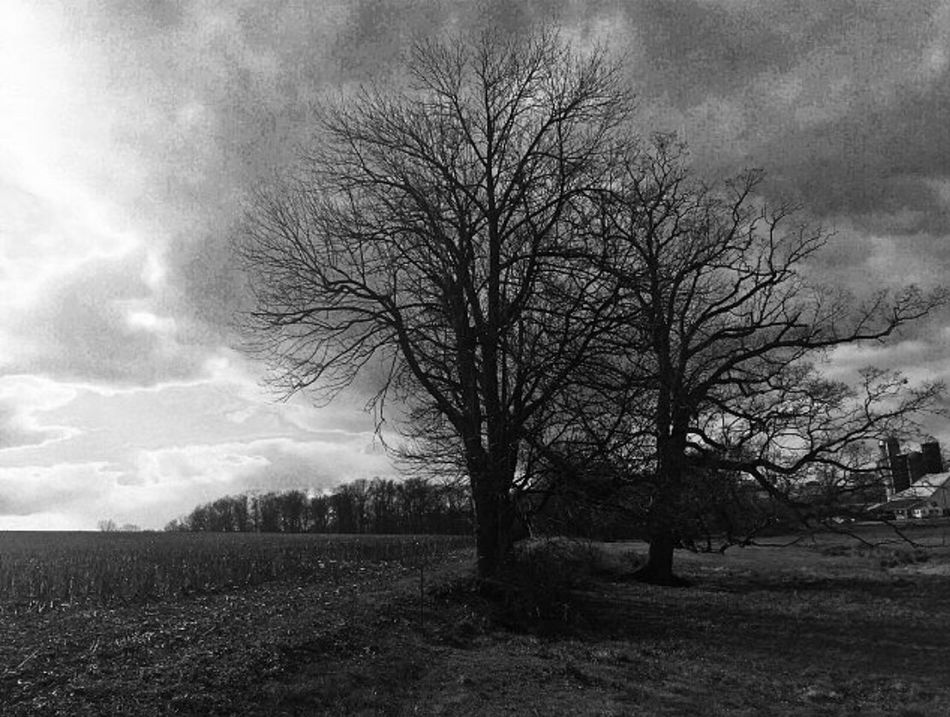 Black And White Photography Pennsylvania Lancaster County Pennsylvania Tree Bare Tree Nature Tranquility Sky Field Tranquil Scene No People Growth Beauty In Nature Outdoors Day Branch Agriculture Landscape Scenics