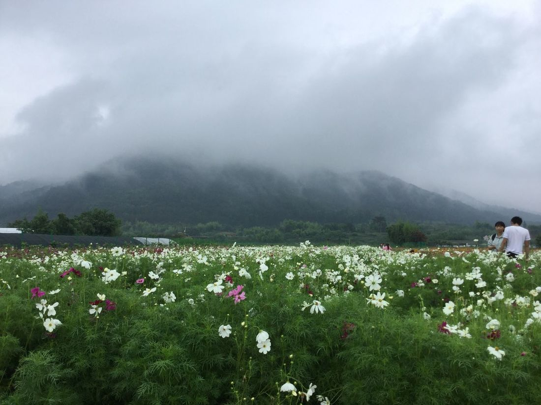 By Lee People Mountains Fog Flowers