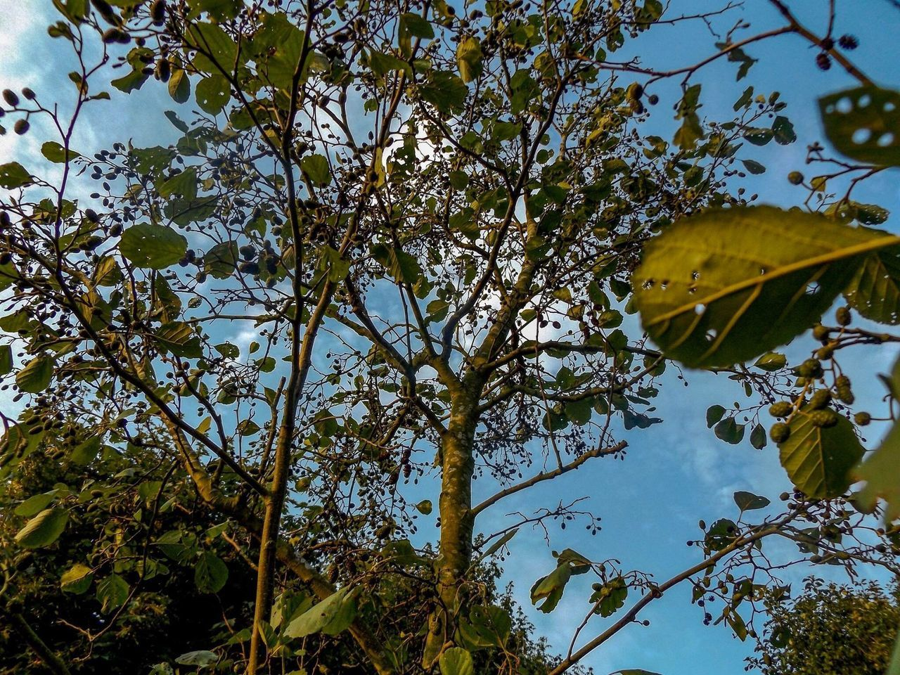 tree, leaf, nature, growth, branch, low angle view, beauty in nature, outdoors, day, autumn, no people, sky, scenics, fragility, freshness, close-up