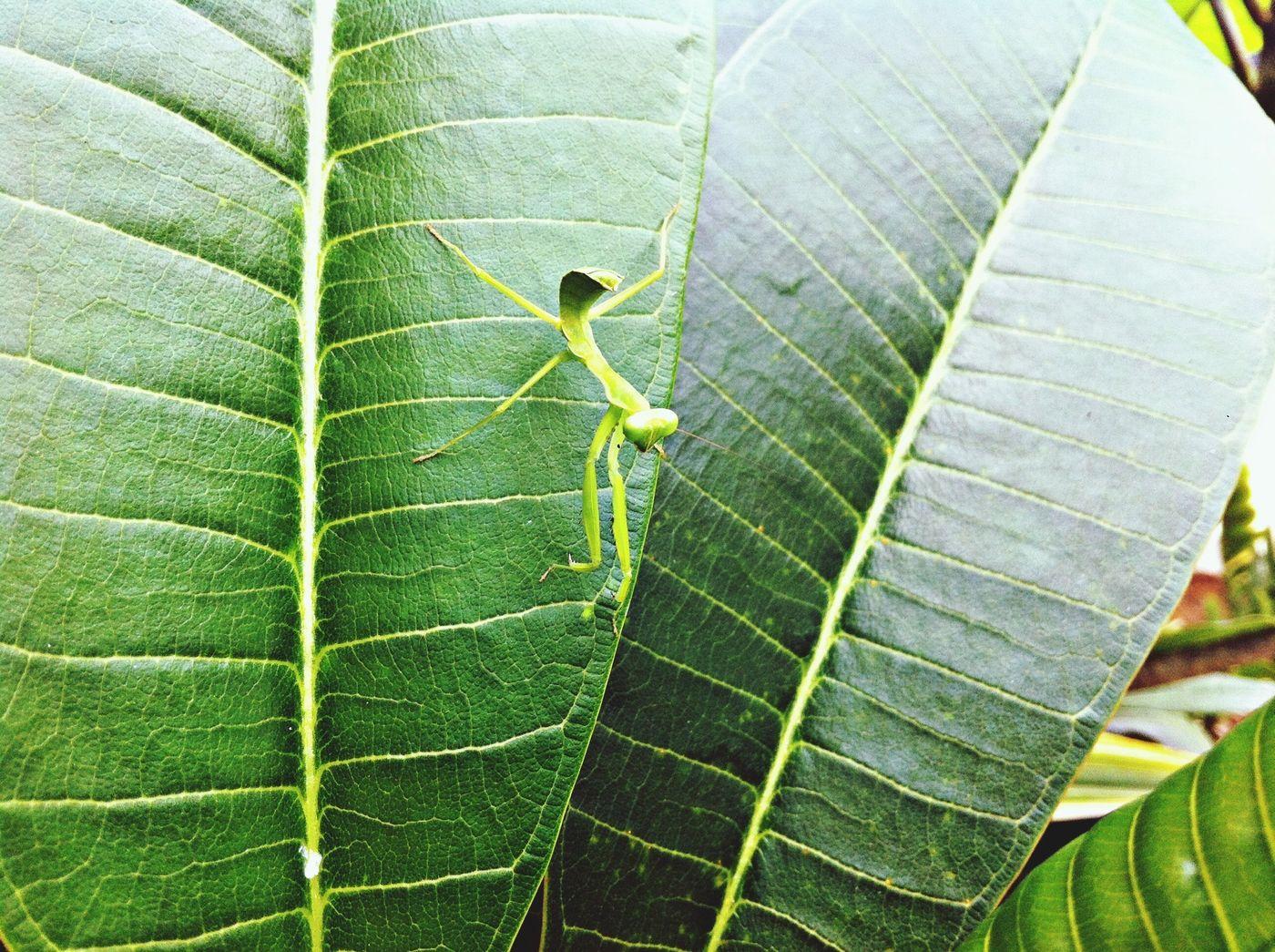 Hello World Leaf Green EyeEm Nature Lover