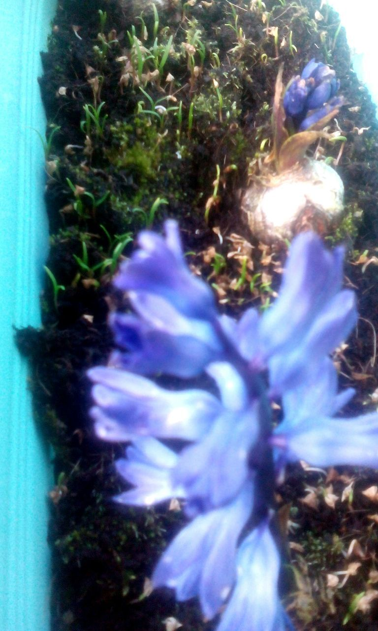growth, nature, no people, plant, close-up, sunlight, outdoors, day, beauty in nature, blue, fragility, grass, flower