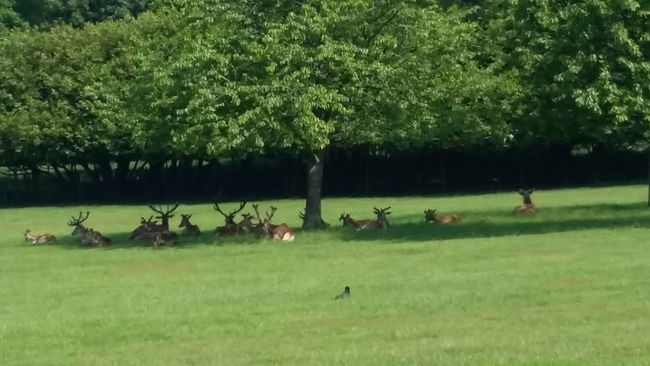 Basking boys. Wollaton Park Hanging Out Wollatonpark Wollaton Hall Spring Collection Deer