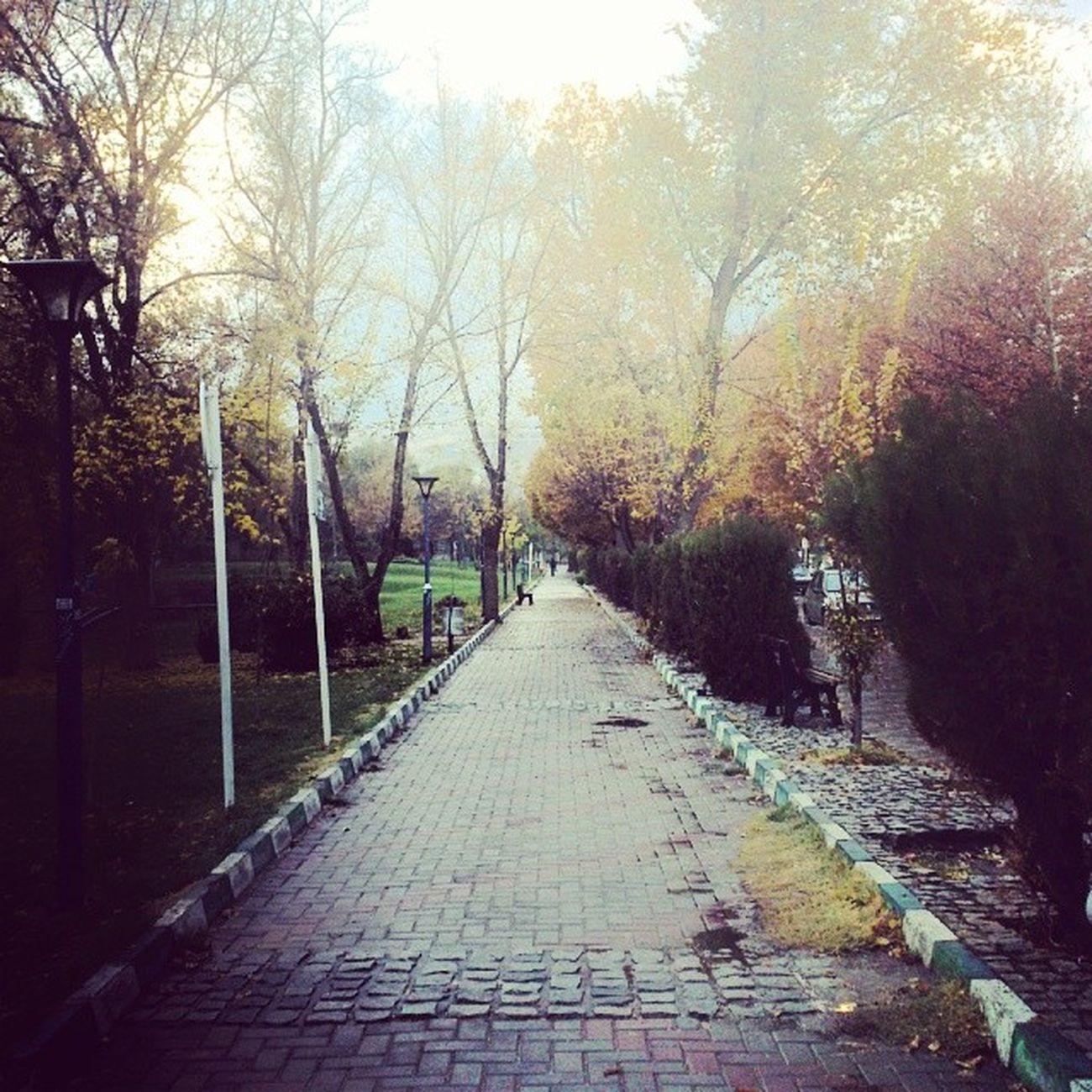 Autumn Fall Rain Hamedan Park Trees Hamadan