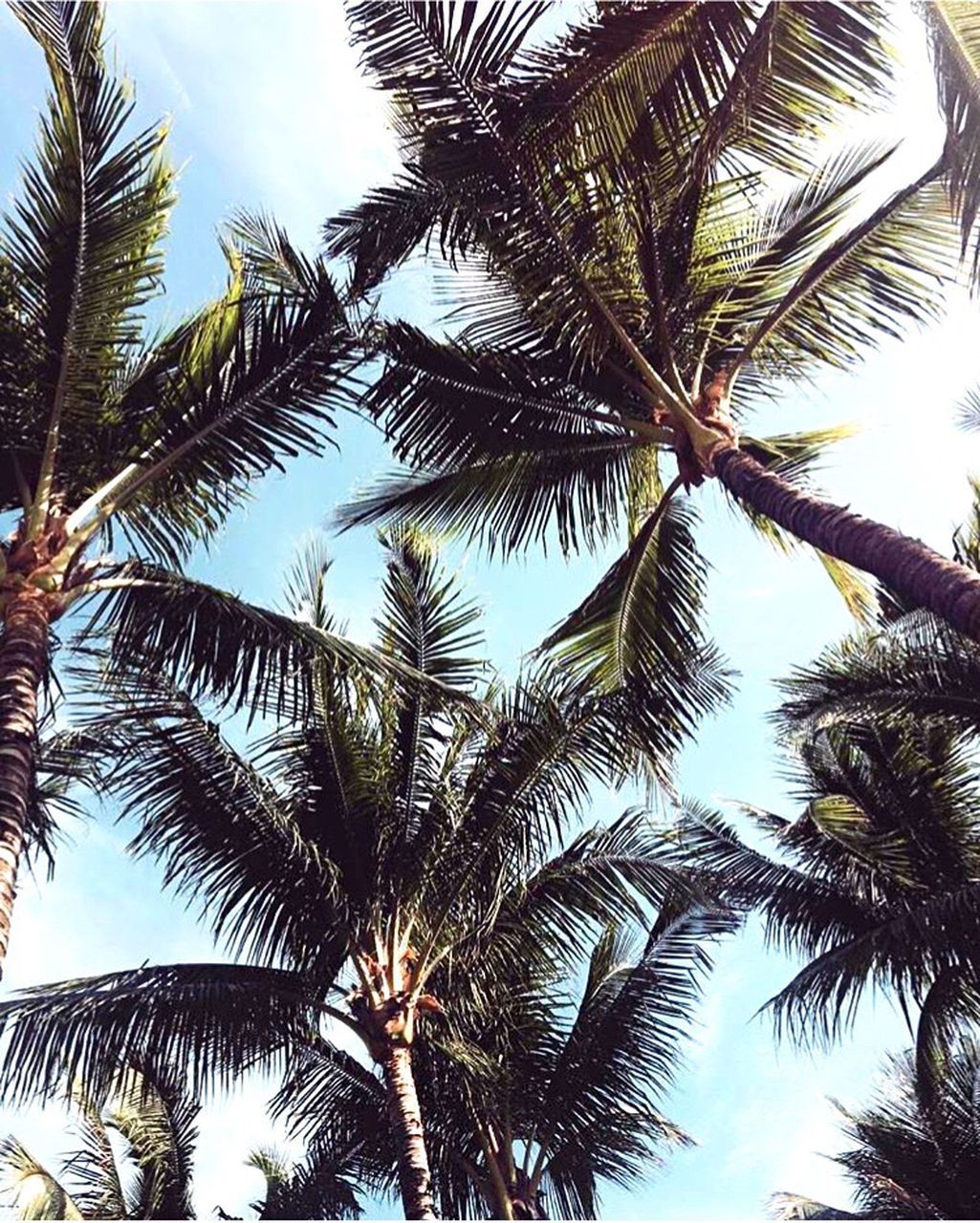 palm tree, tree, low angle view, nature, green, sky, tree trunk, adventure, beauty in nature, scenics, day, outdoors, growth, tranquility, no people, coconut