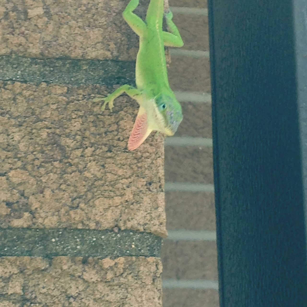 Lizard Gecko Green Animal Wildlife Wall Sticking South Hanging Out Hanging Around Nature Outdoors No People Animal Themes Cute Warm Day Close-up