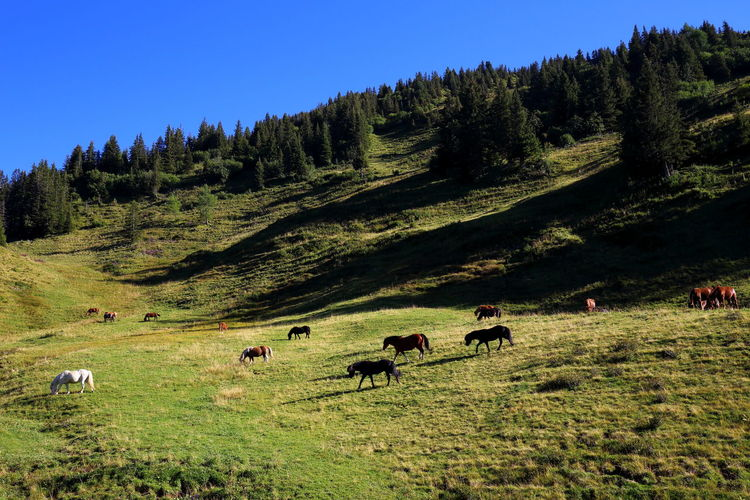 Alpine EyeEm Best Shots EyeEm Nature Lover Farm Life Grazing Heile Welt Horses Pasture Peace Prättigau Relaxing Animals Evening Forest Group Herd Herd Of Horses Horse Landscape Light And Shadow Livestock Many Mountain Rural Scene Shadows