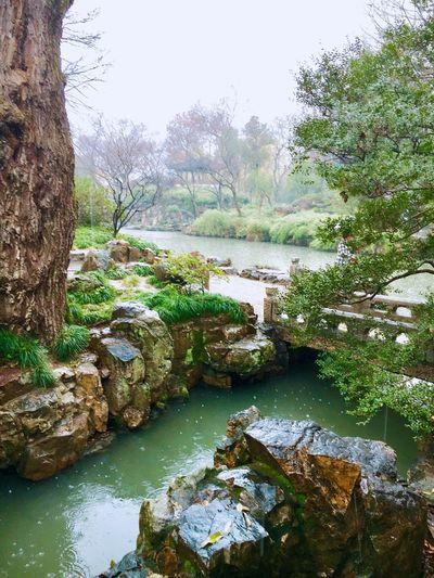 Rainy Days Tree Inner Courtyard Water Green Chinese Garden Garden Architecture Bridge