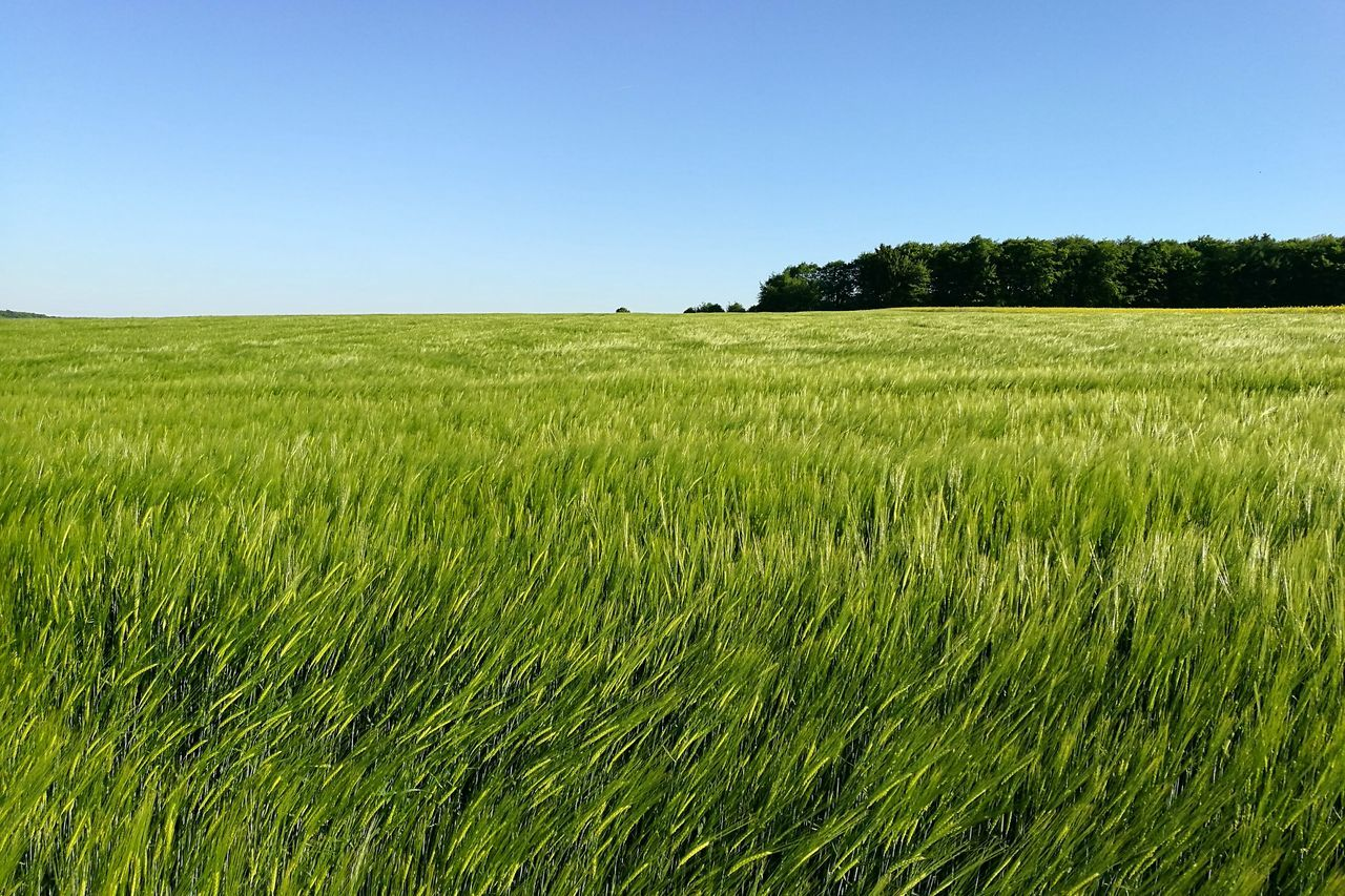 'Field' Nature Springtime Plant Agriculture Freshness Beauty In Nature Field Green Fields Green Grassfield Grass