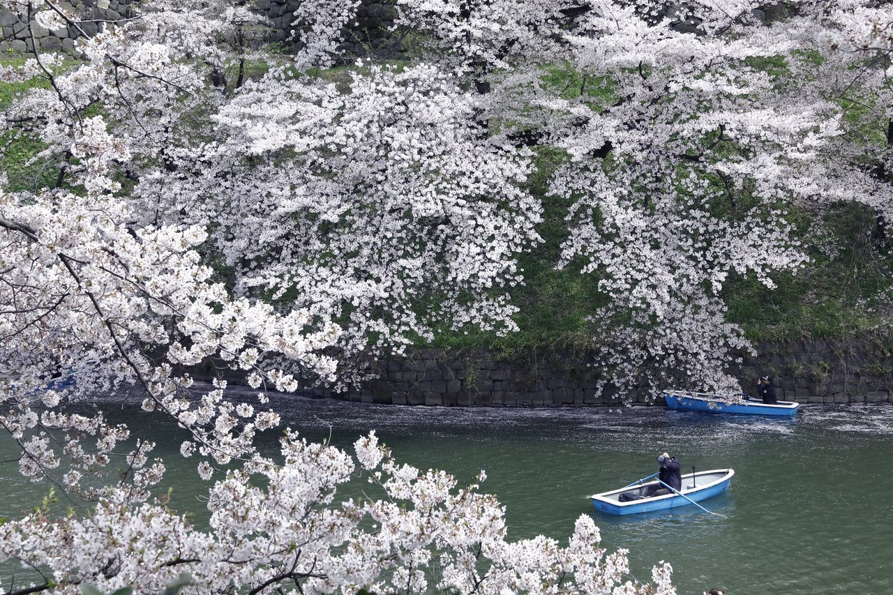 tree, nature, flower, beauty in nature, nautical vessel, boat, water, transportation, blossom, day, lake, branch, springtime, growth, scenics, outdoors, men, fragility, freshness, people