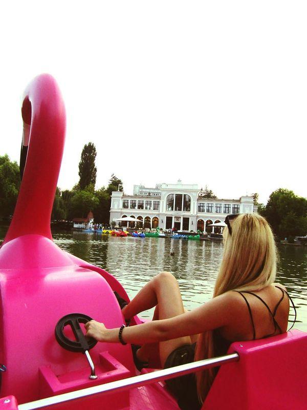 Lake Lakeviewpark Boatlake Boating WaterBicycles Entertainment MyCar Pink Flamingo Taking Photos That's Me Enjoying Life Women Who Inspire You Hungariangirl Park CentralPark Woman Who Inspire You Romania Naturephotography Eyeemcollection Eye4photography