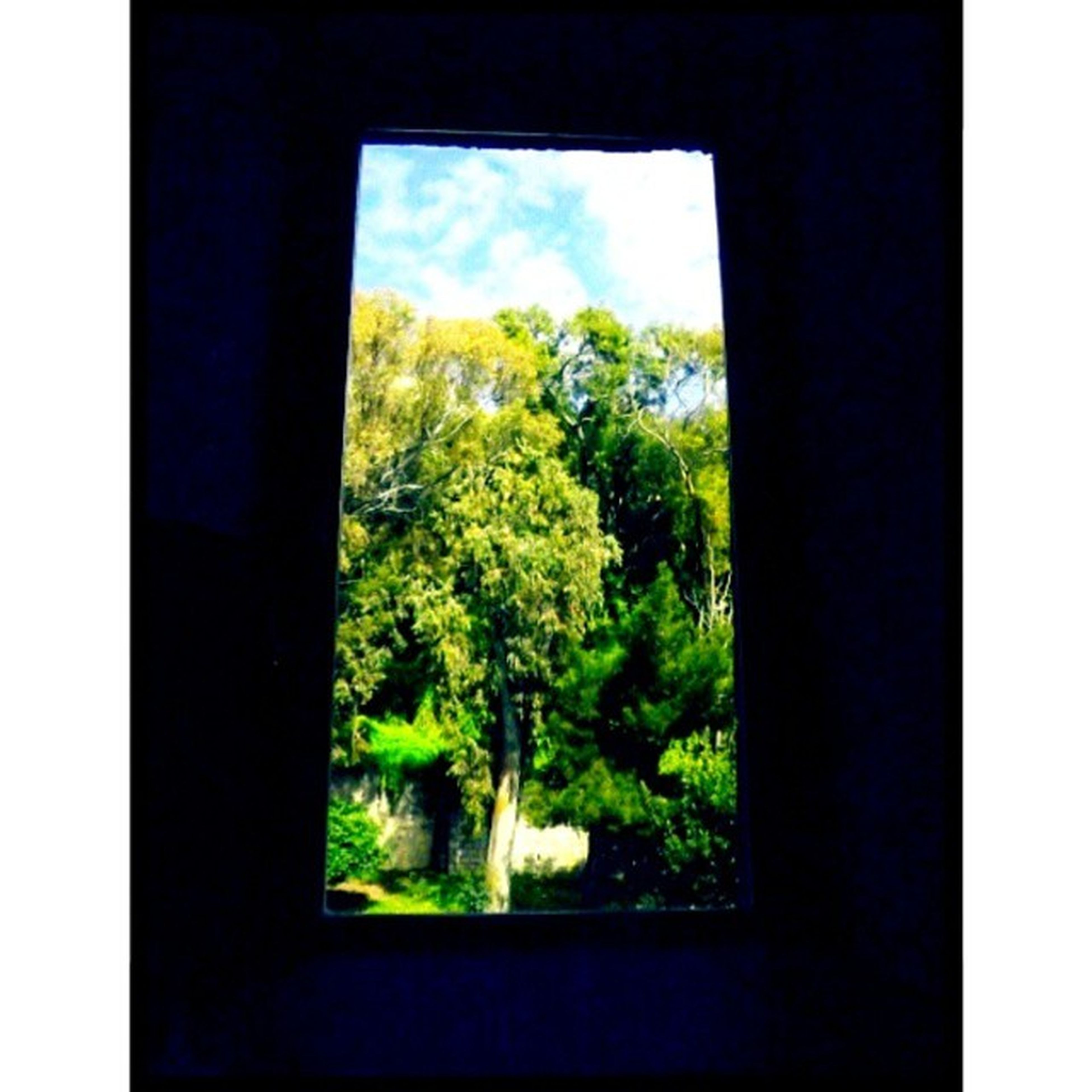 window, transfer print, indoors, tree, glass - material, growth, auto post production filter, green color, transparent, plant, nature, looking through window, house, sky, day, beauty in nature, no people, glass, window sill, built structure