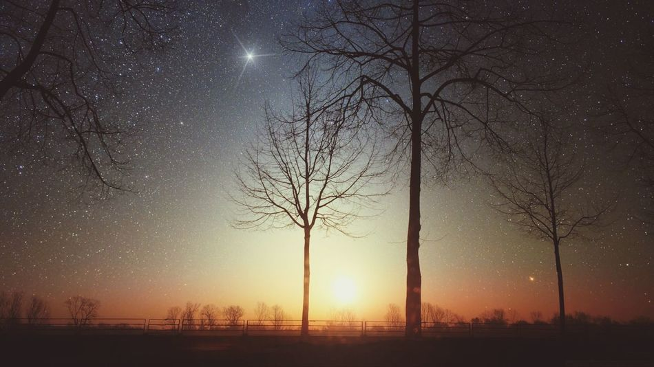 Beautiful stock photos of space, Bare Tree, Beauty In Nature, Branch, Galaxy