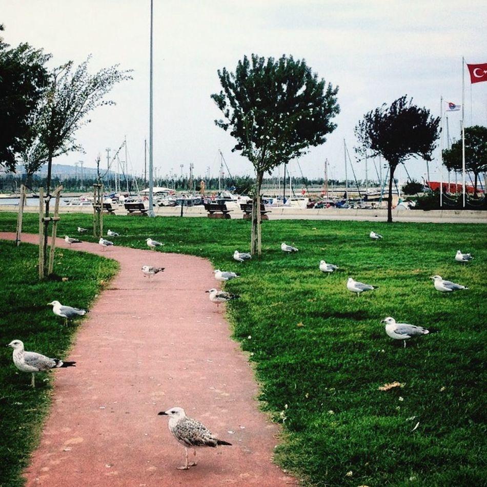 Hanging Out Hello World Enjoying Life Relaxing Taking Photos Walking Around EyeEm istanbul turkey