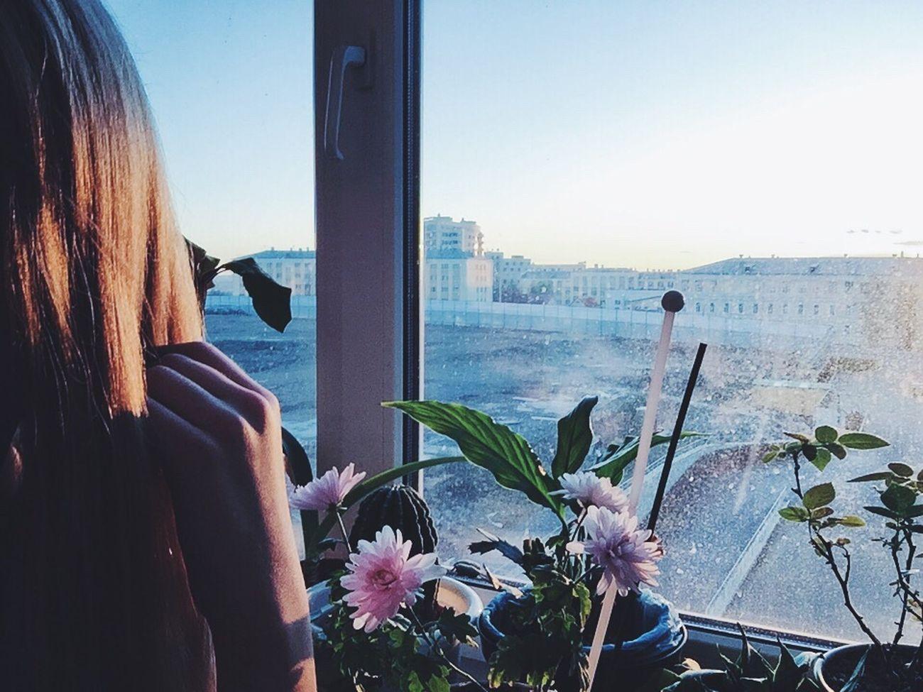 Followme Me растения солнце