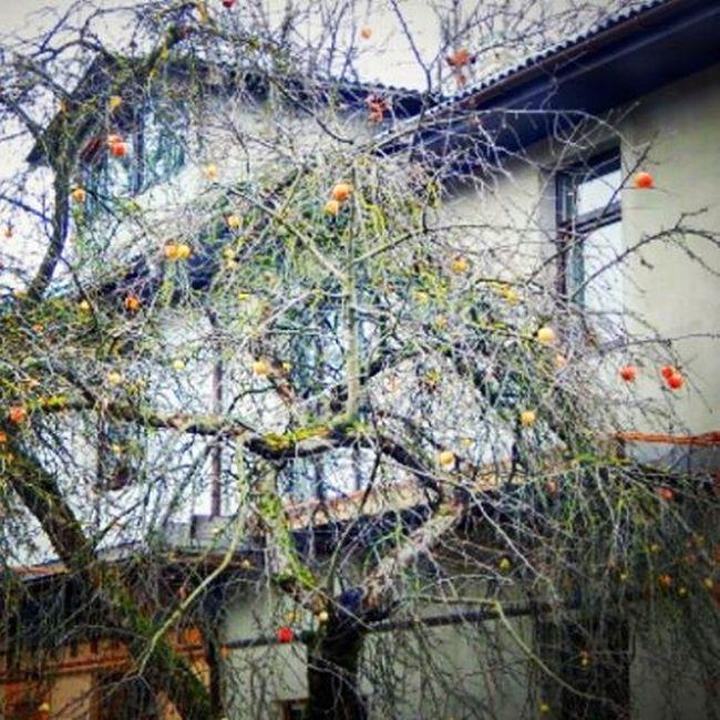 Rudens krāsas. Autumn colors. Rudens Aboli Abele Rudenskrasas Autumn Autumncolors Apple Showcase: December