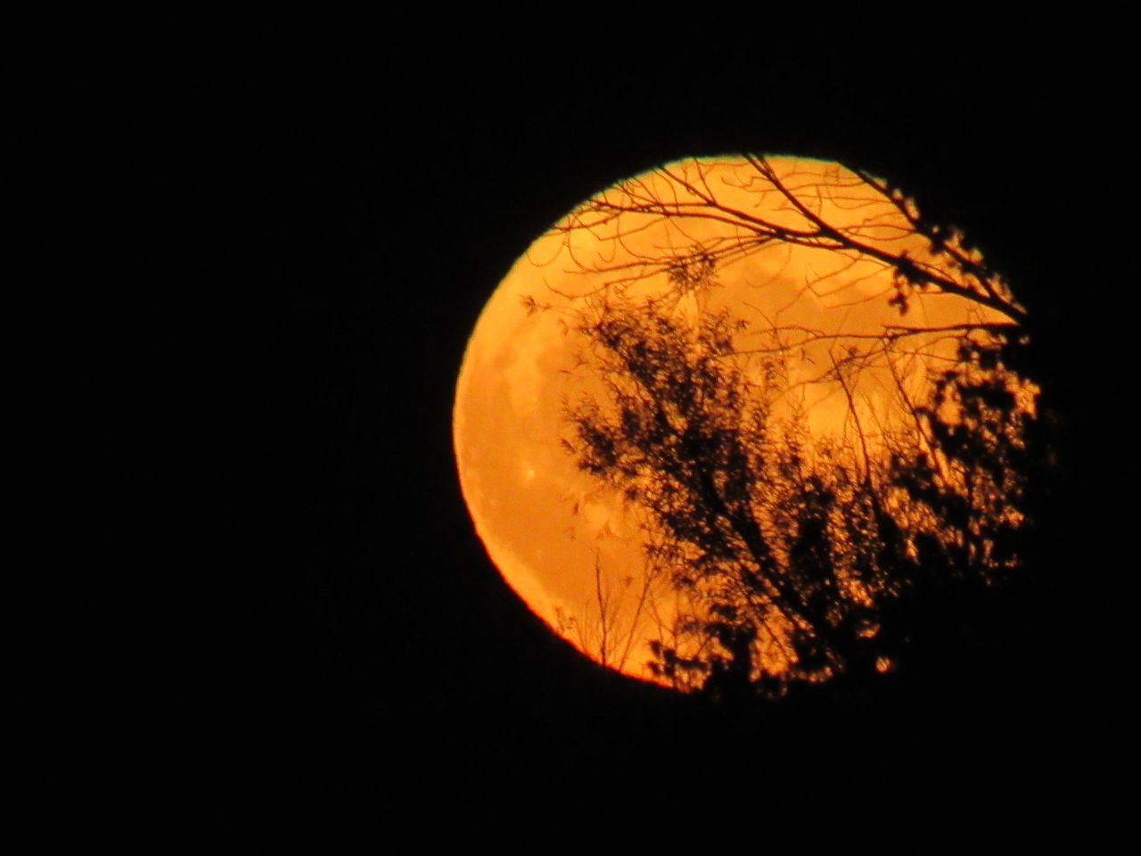 Astronomy Planet - Space Moon Space Night Outdoors Nature Solar System No People Beauty In Nature Planet Earth Supermoon Beavermoon Take A Walk With Me Loudthougts IMYE