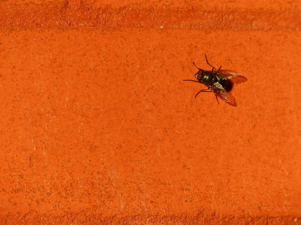 Brick Fly Fly On Brick Full Frame Orange Orange Wall  Textured  Wall Zoology