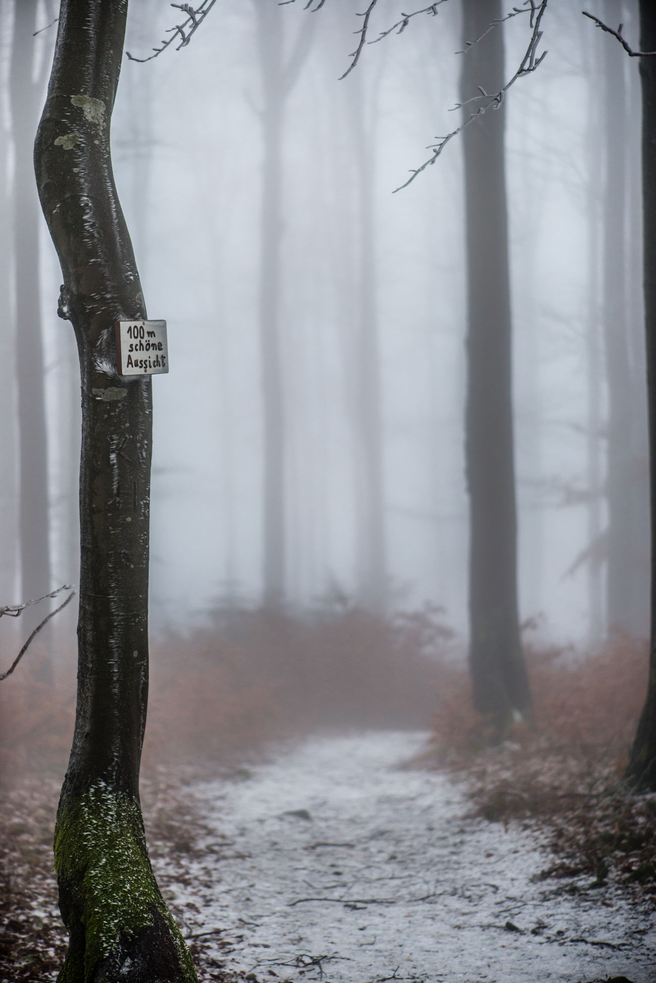 100m nice view Foggy Weather Hiking Trees