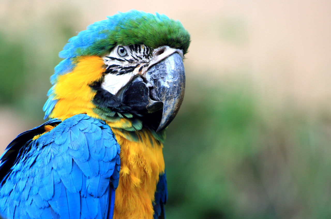 What are you looking at? Birds Animals Bird Photography Zoo Nature Nature_collection Macaw South America Bird
