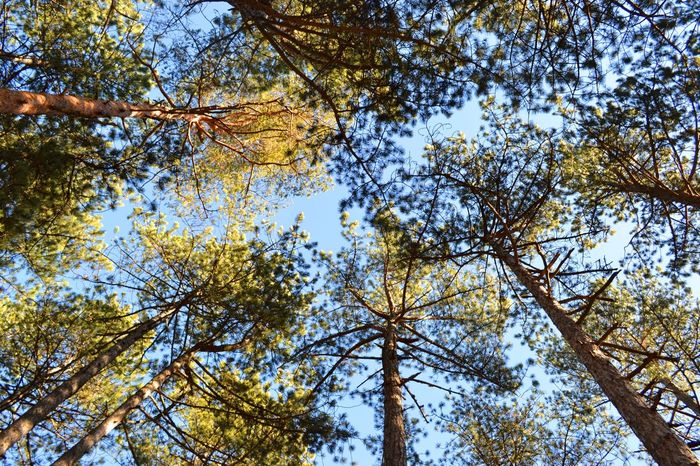 Backgrounds Beautiful Nature Light Nature Sky Tara National Park Trees Treetops First Eyeem Photo