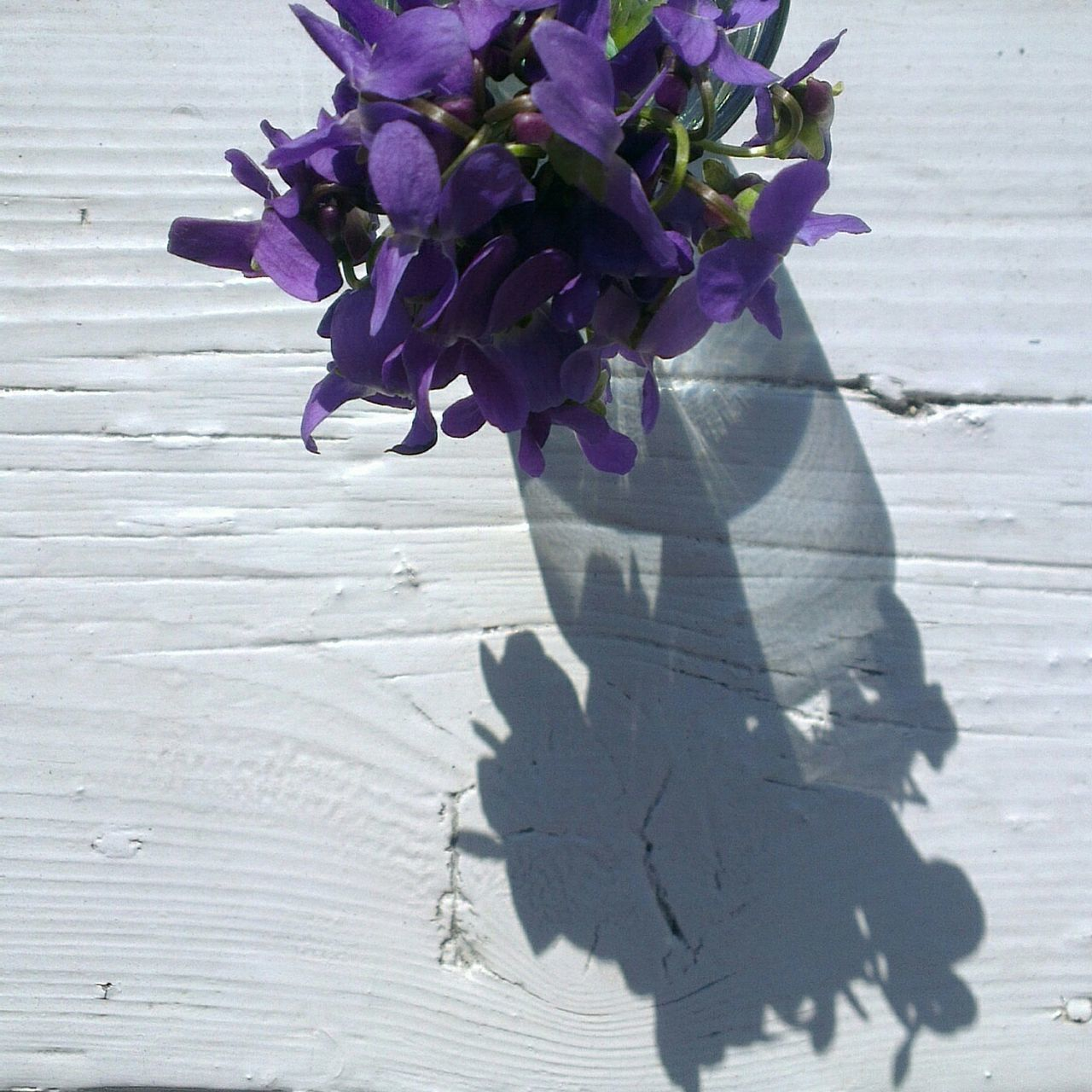 Violet Bouquet White Ledge Purple Flower Light&shadow Spring Mobile Photography