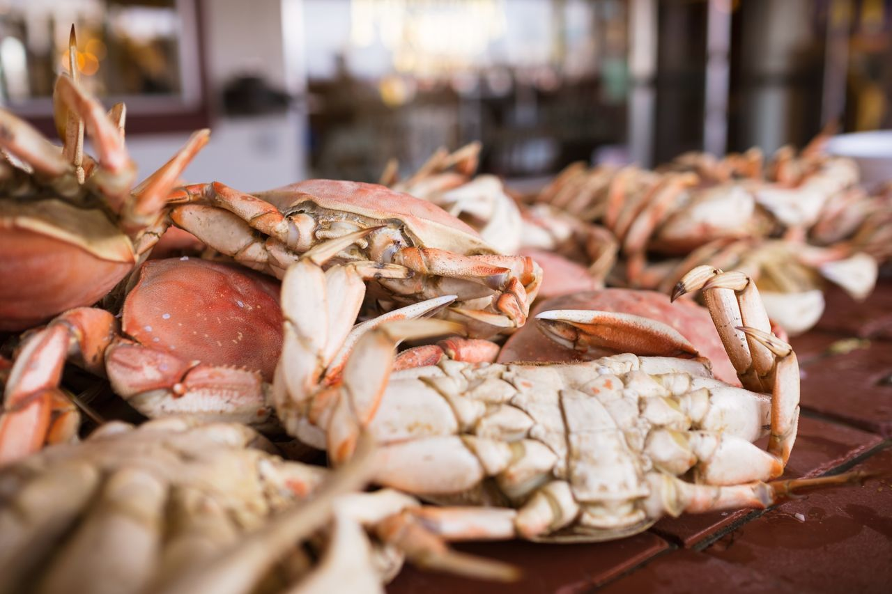 Abundance Catch Close-up Crab Delicious Dungeness Crab Fish Market Fisherman's Wharf Food For Sale Fresh Fish Fresh Food Freshness Heap Large Group Of Objects Market Market Stall Raw Food Ready-to-eat Retail  Sale Seafood Selective Focus Speciality