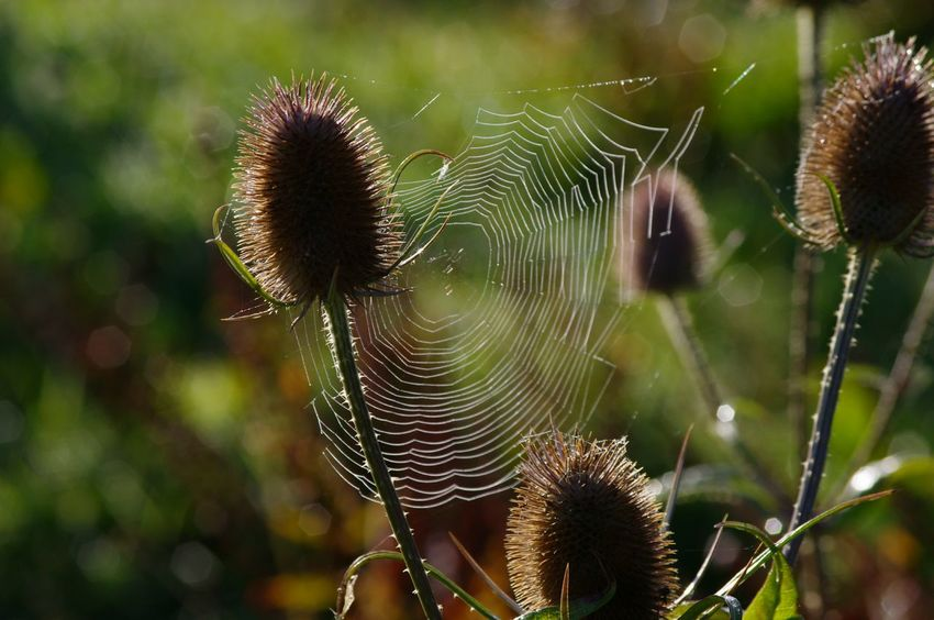 Spider Web Focus On Foreground Nature Outdoors Fragility Beauty In Nature No People Close-up Tezal Nature On Your Doorstep Morning Sun Light Dew Drops