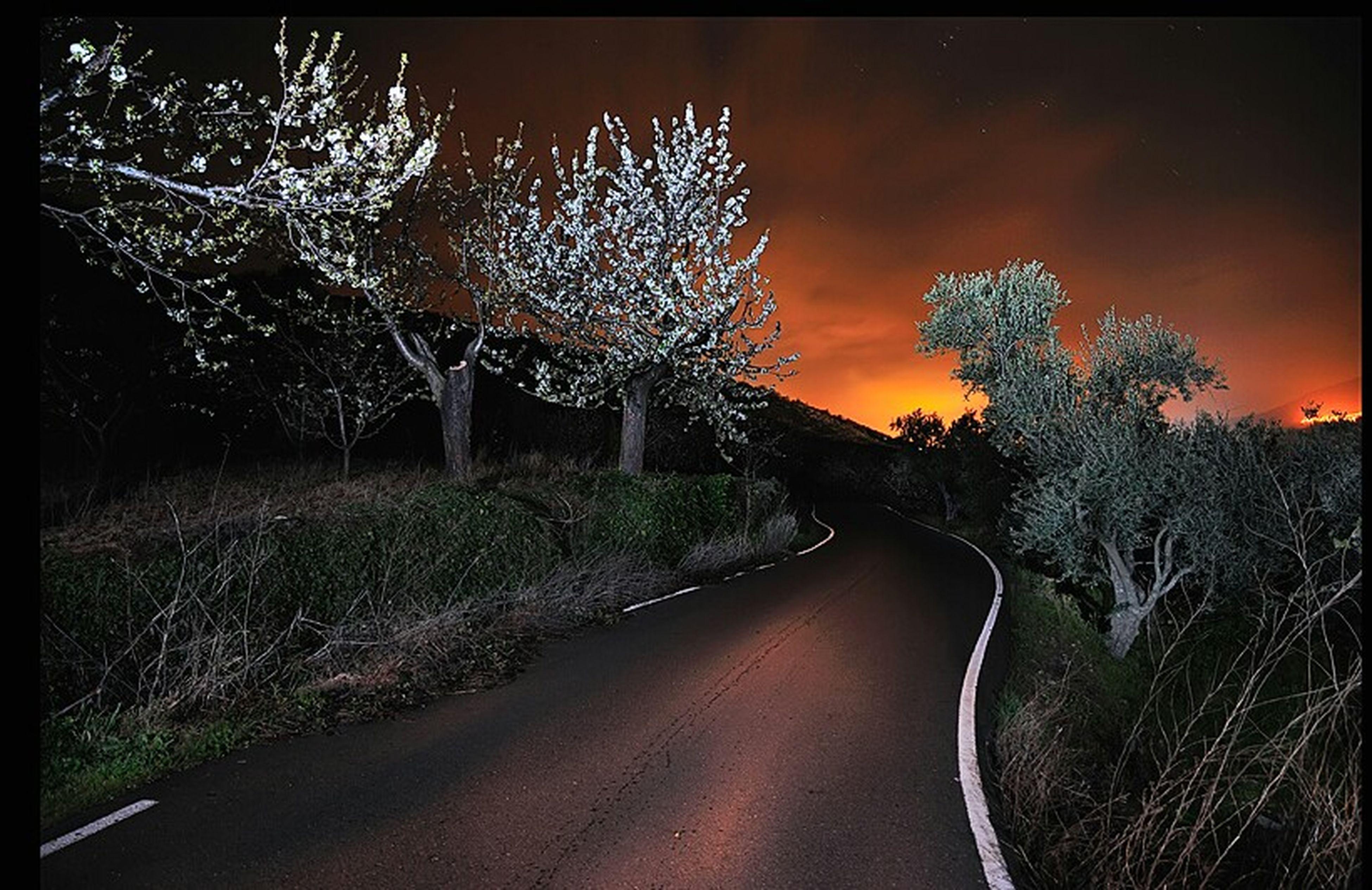 Cerezos en flor........ Lanscape Night Nature