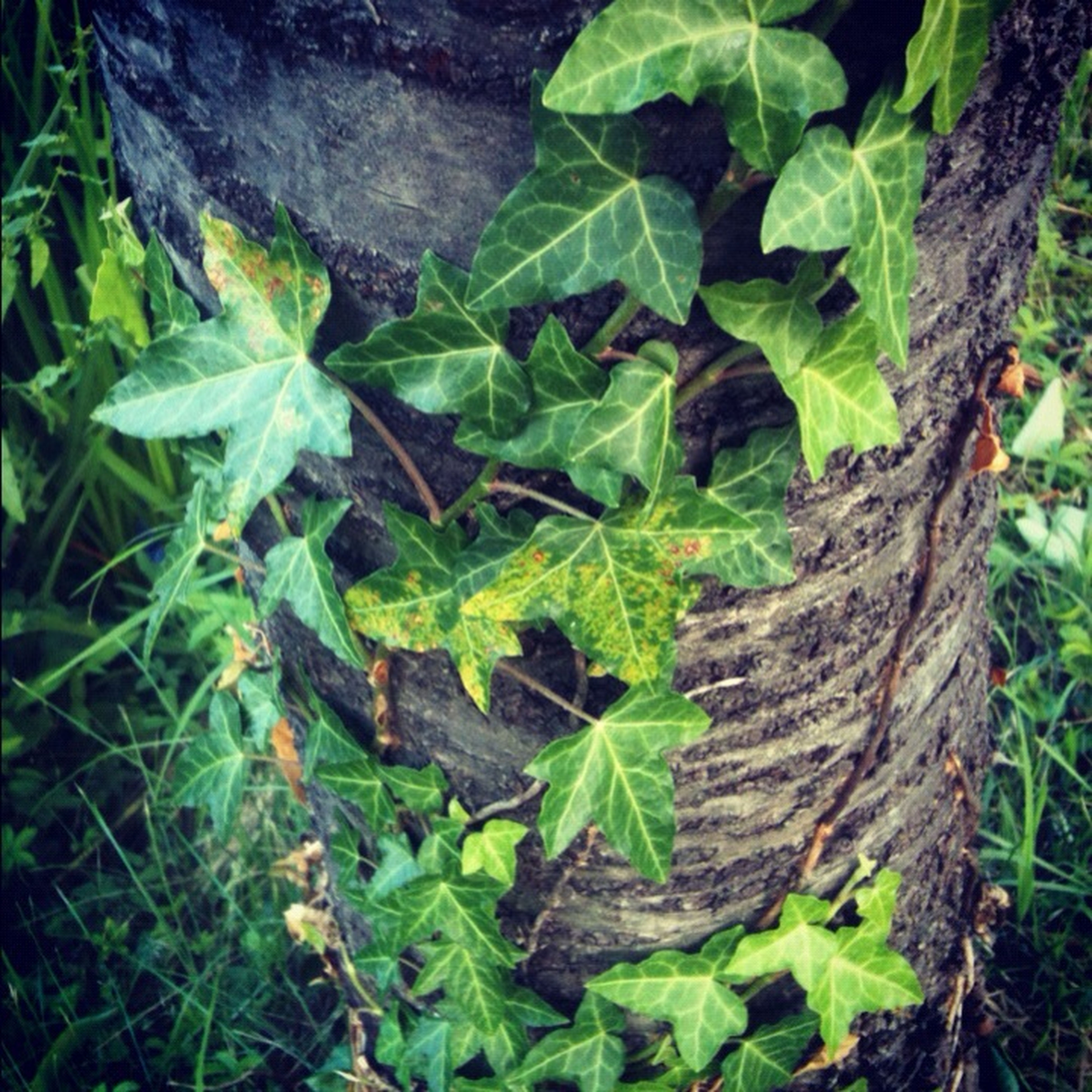 green color, leaf, growth, plant, nature, high angle view, close-up, growing, moss, green, beauty in nature, tranquility, day, outdoors, freshness, natural pattern, field, no people, grass, leaf vein