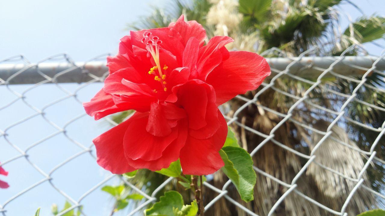flower Feelthejourney Flower Colors Flowerslovers Discover The World Red Flower Red Flower Petal Original Experiences Showcase June Eyeemphoto Color Palette