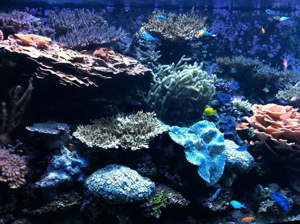 Abundance Aquarium Aquarium Life Aquarium Photography Beauty In Nature Bloom Blue Colorful Coral Day Full Frame Geology Multi Colored Nature Non-urban Scene Outdoors Reef Rock Formation Rocky Scenics Sea Seattle Aquarium Tranquil Scene Tranquility Vibrant Color Sommergefühle