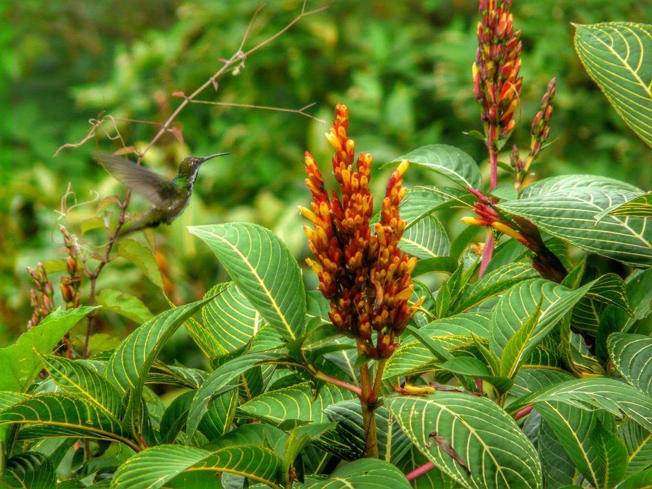 Beautiful stock photos of kolibri, Animal Themes, Animals In The Wild, Bird, Bud