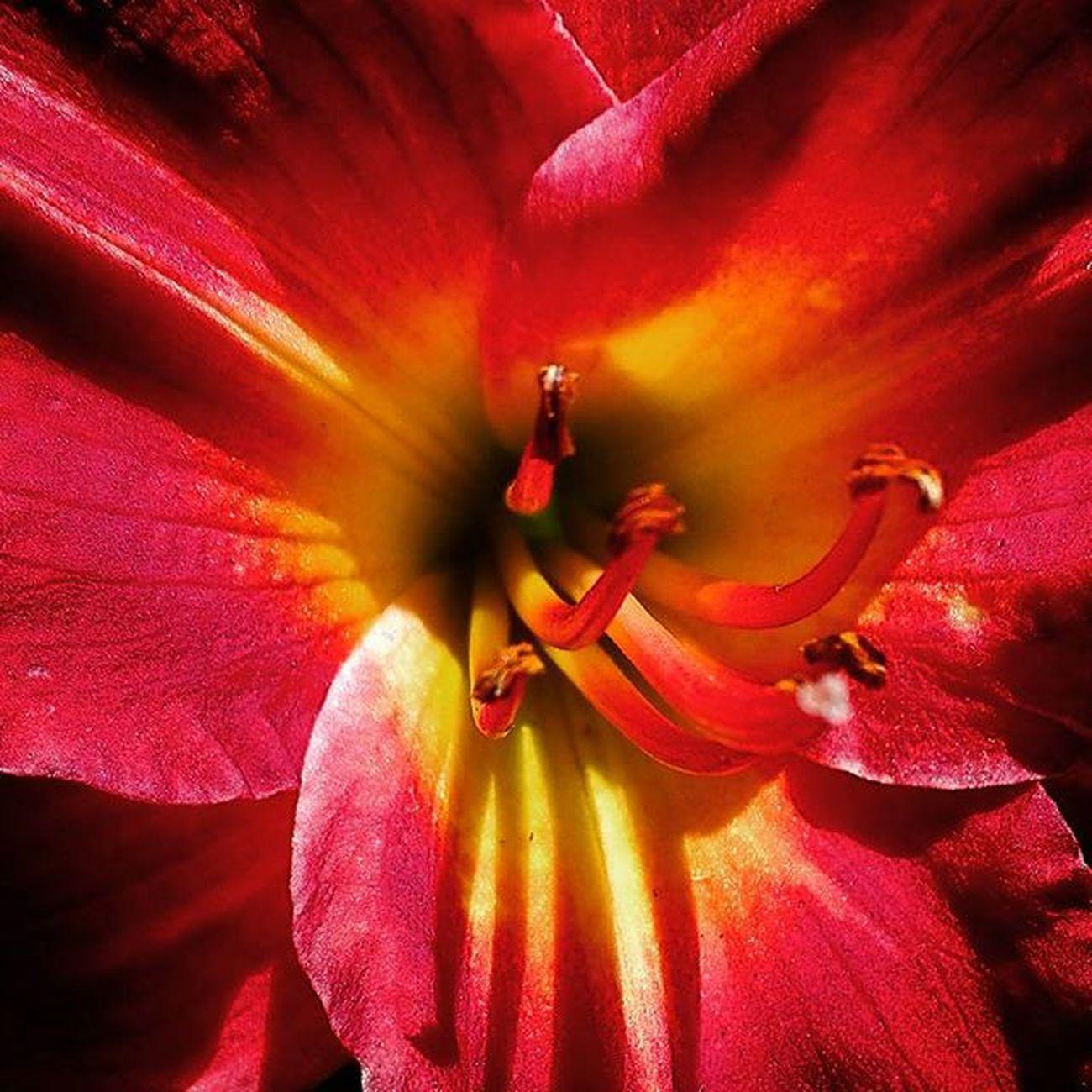Flower Nature Flowersandmacro Af_floral➡🌼flowers Red 9Vaga_ColorRed9 Pocket_colors Rainbow Wall bowMacroworld_tr Tt_wt_rflora Ptk_flowers_red1 Hello_red