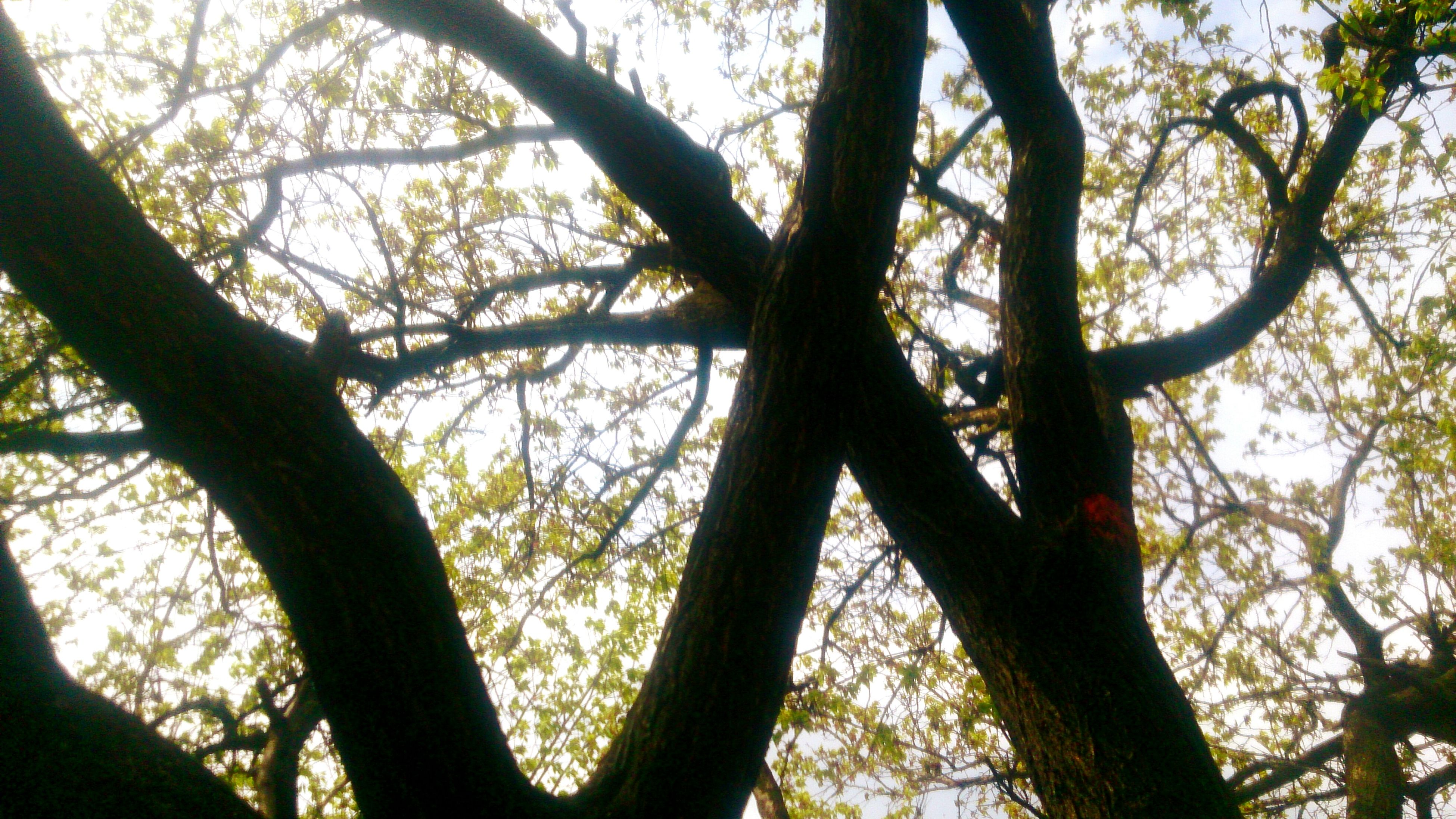 low angle view, tree, sky, branch, nature, growth, no people, day, outdoors