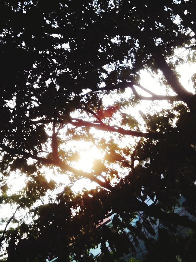 Tree Low Angle View Beauty In Nature Sunlight Treetop Nature First Eyem 3.0 EyeEm Nature Lover Enjoying The View Sunset