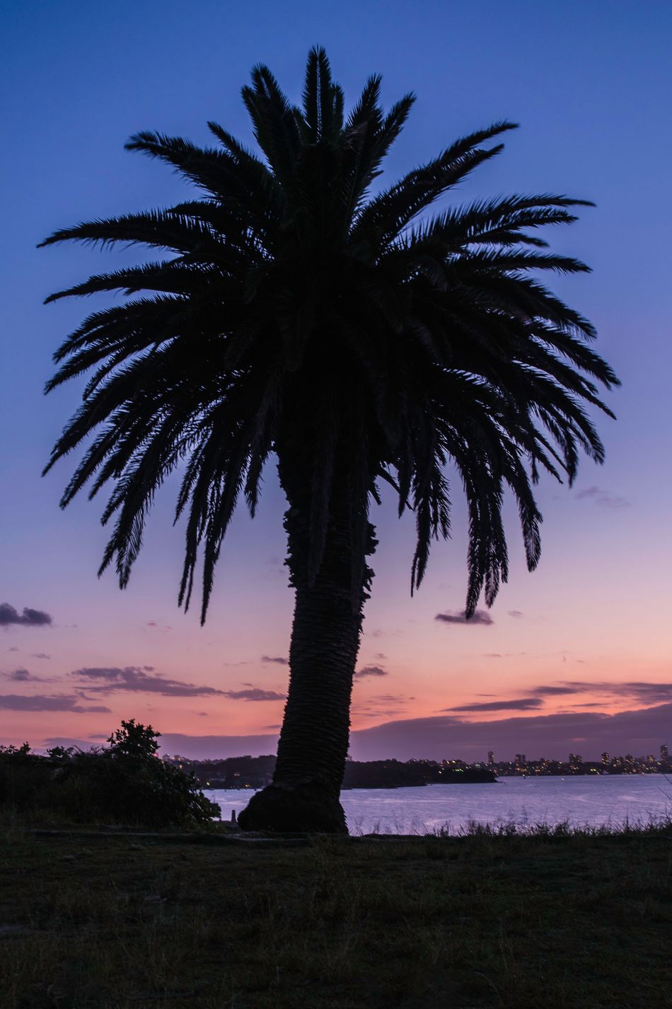 Tingle Tangle Palm Nature Scenics Silhouette Sunset No People Sky Tranquility Palm Tree Single Tree Beach