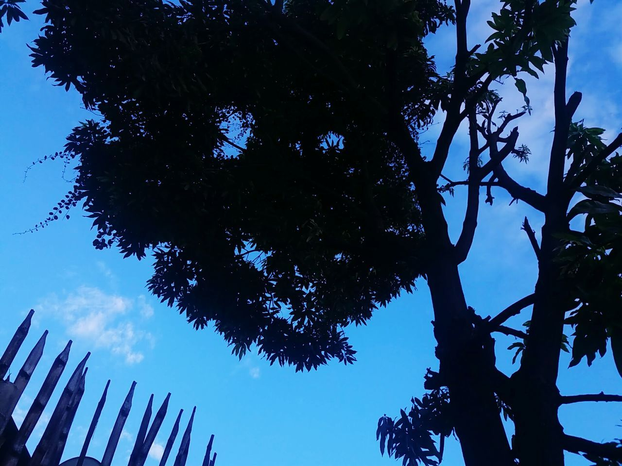 tree, low angle view, growth, day, branch, outdoors, nature, no people, sky