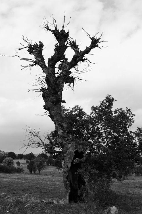 Bw Bwoftheday Tree Died Tree