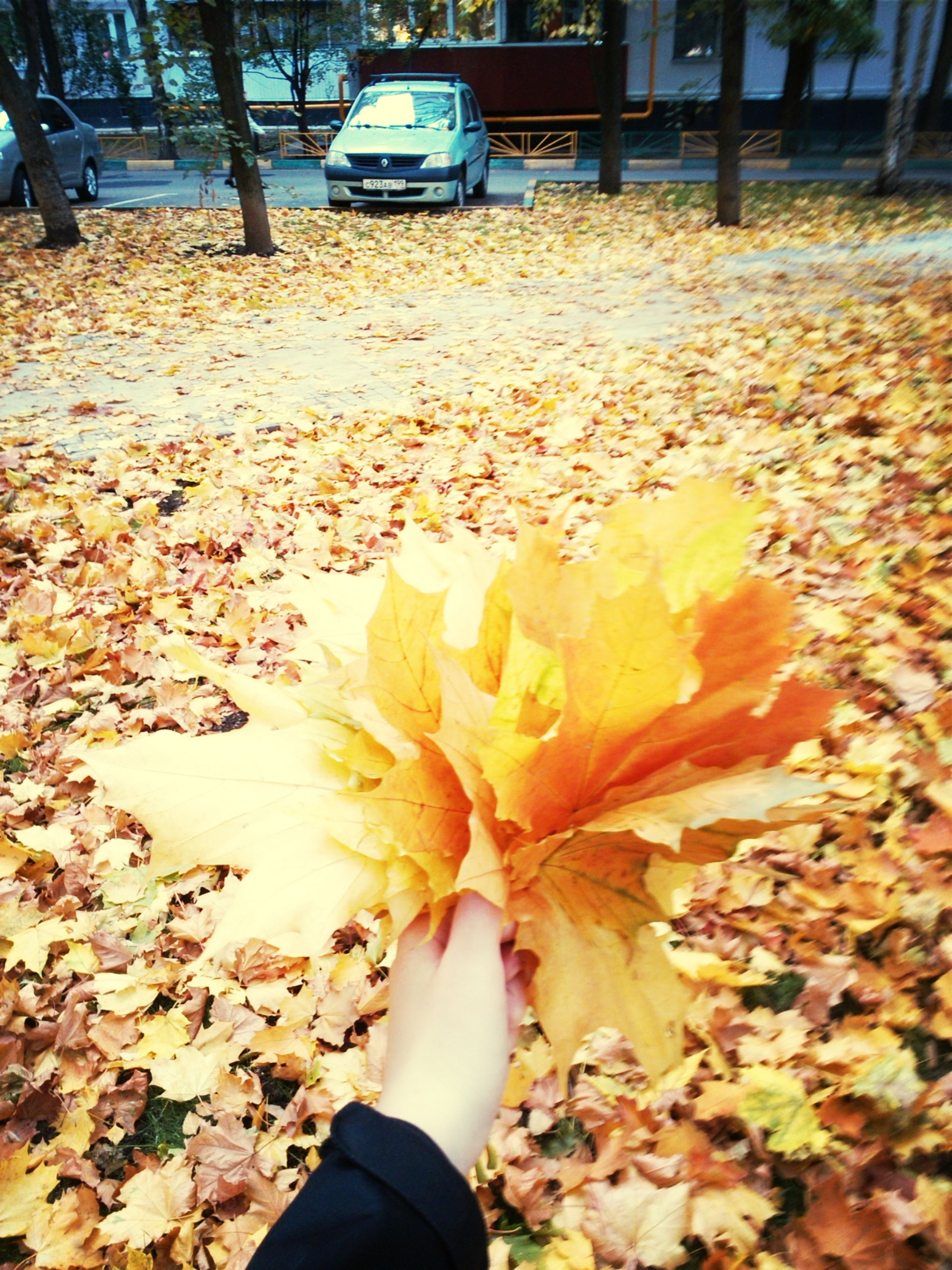 personal perspective, leaf, autumn, season, low section, lifestyles, dry, change, person, leisure activity, unrecognizable person, leaves, part of, outdoors, holding, nature