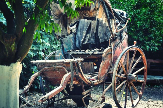 Check This Out Cinderella Was Here Horsedrawncarriages Old But Awesome Carriage Transportation Fairytale  Cinderella Majestic Scenics Tranquil Scene Beauty In Nature Garden Photography Backyard Getting Inspired Malephotographerofthemonth Abandoned Damaged Rusty The Past Tranquility Taking Photos From Where I Stand EyeEm Gallery From My Point Of View
