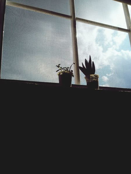 Succulents Succulent Plants SucculentsLover Window Sky And Clouds Shadows & Lights EyeEm Nature Lover Eyeem Plants Eyem Gallery Cloud_collection  Taking Photos Minimalism Simple Things In Life Simple Things Are The Best  Simple And Beautiful