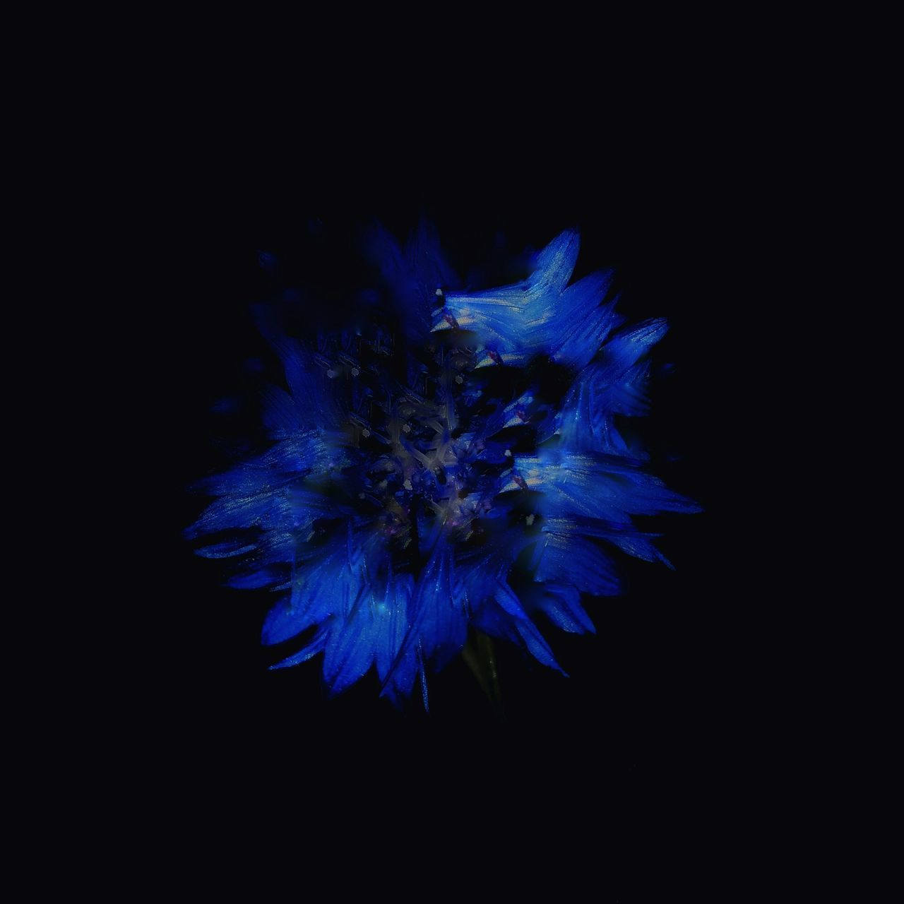Blue Studio Shot Exploding Black Background No People Night Firework Display Firework - Man Made Object Sky Beauty In Nature Close-up Outdoors Astronomy EyeEmNewHere