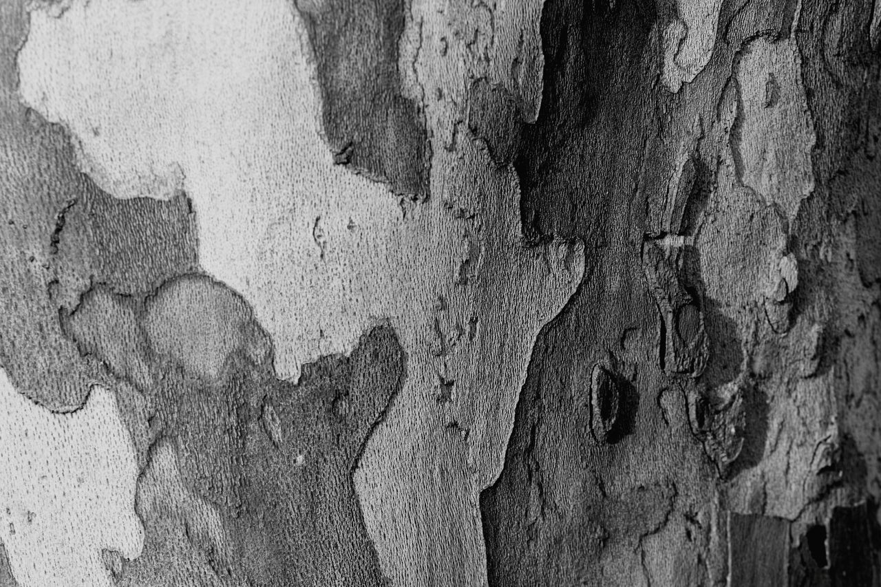 Sycamore tree. Bnw_friday_eyeemchallenge Black And White Texture Sycamore Sycamore Tree Textures And Surfaces Texture Bark Tree Light And Shadow Shadows Camouflage Full Frame Surfaces Blackandwhite Black And White Bnw B&w Monochrome Monochromatic Malephotographerofthemonth Nikon Photography EyeEm Best Shots Nature EyeEm Nature Lover