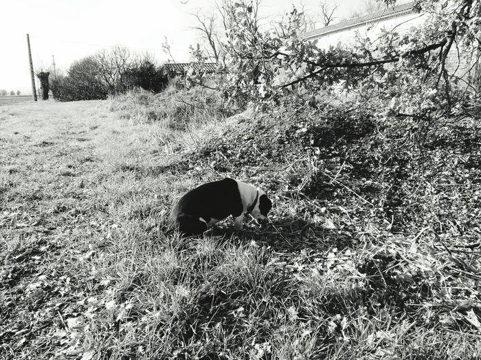 Dog Animal Hunting Rat , Perro Recien Cazada Rata :) France Toulouse My Photo