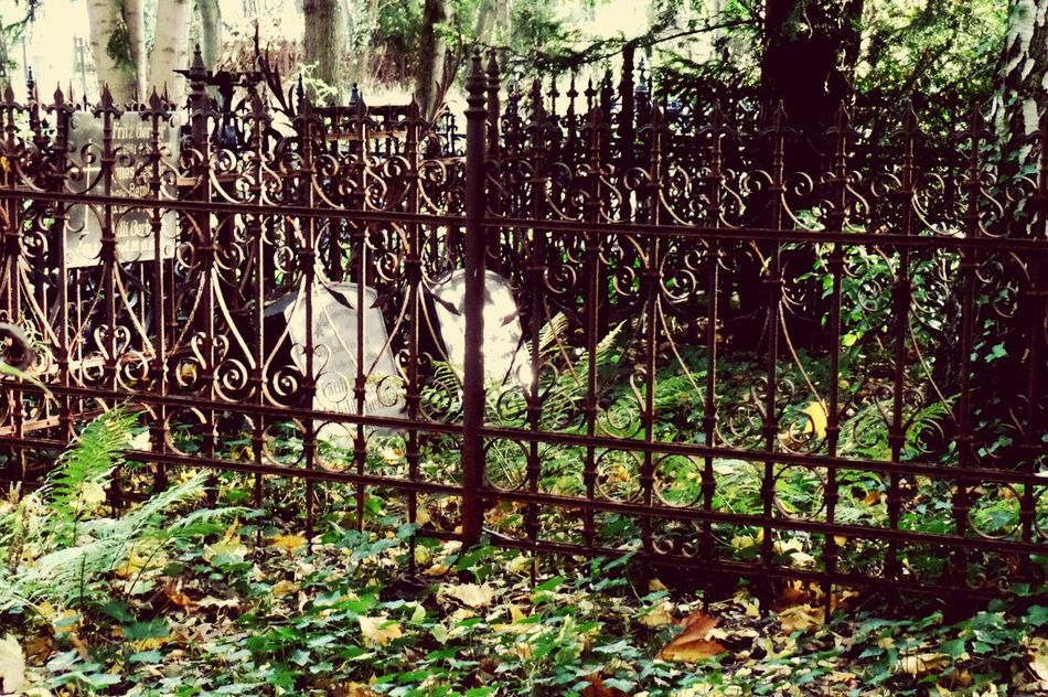 Tranquil Scene Tranquility Cemetery Cemetery Photography Old Gate Autumn Old Cemetery Old Structure Prenzlauer Berg Berliner Ansichten EyeEm Gallery Taking Photos Minimalist Architecture