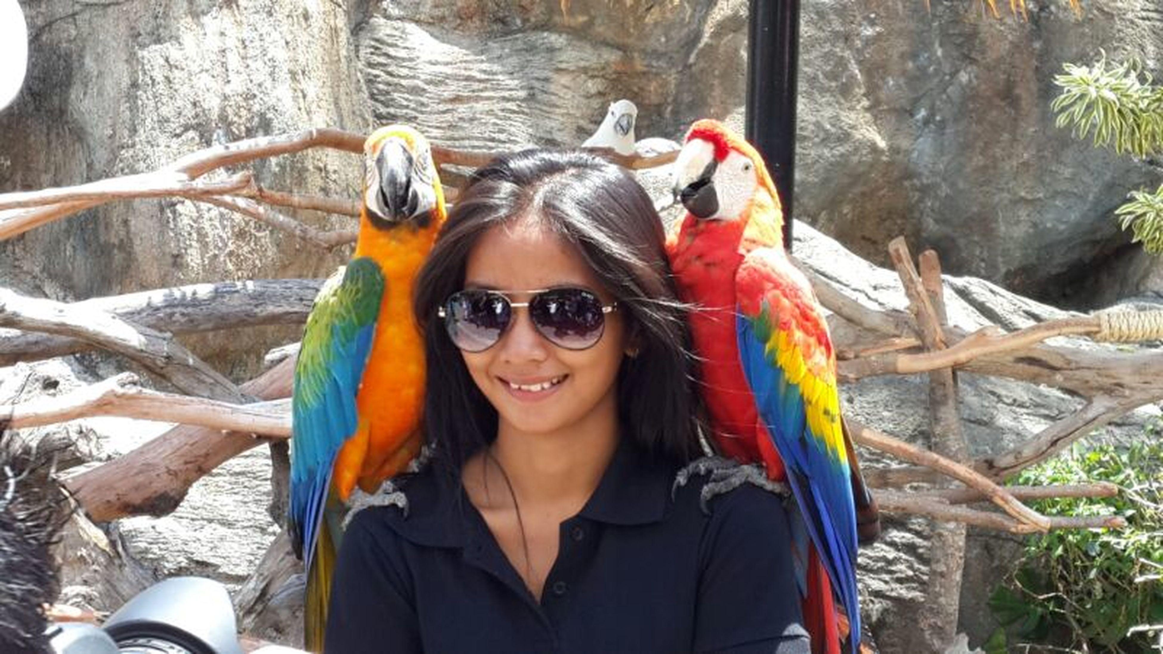Pet Love Pet Birds