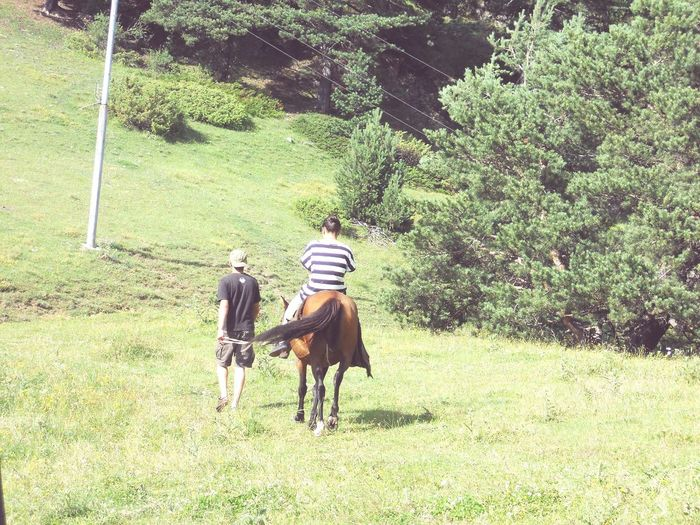 Traveling .with Friends ' Having Good Time . Horse . In Shenaqo
