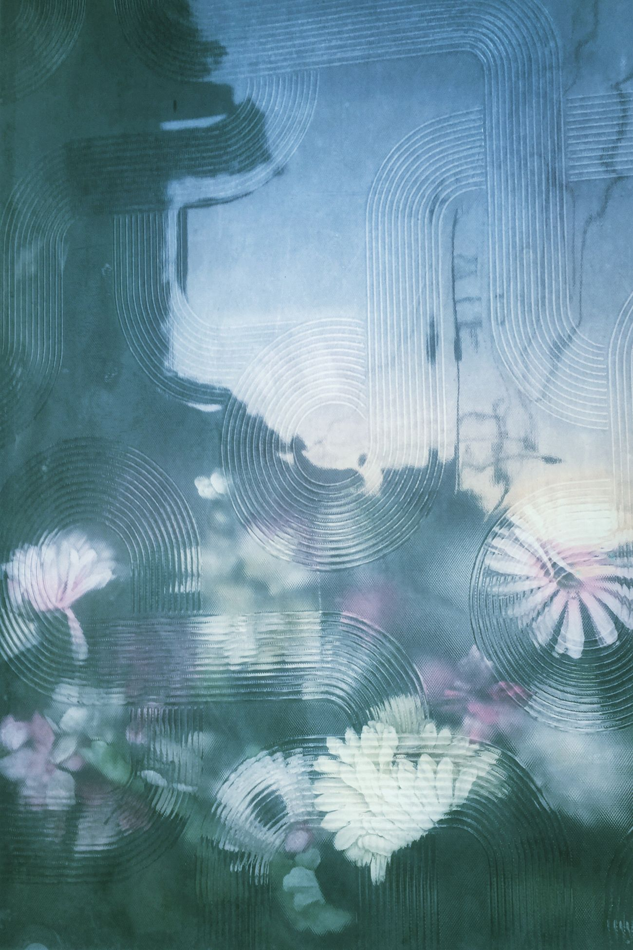 寒いね Reflection IPhoneography Flowers