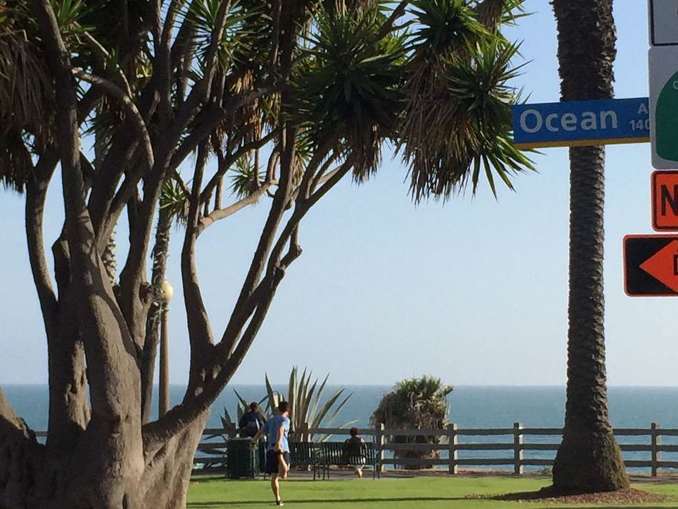 At The Park Ocean View Ocean Life Santa Monica Lifestyle Leisure Activity Grass Palm Trees Trees Boulevard Palisades Park