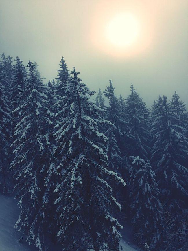 Skiing Schwarzsee Nature Beautiful Day Snow ❄